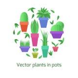 植物的传染媒介汇集罐的 向量例证