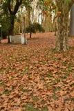 植物的公园蒙得维的亚,乌拉圭 库存照片