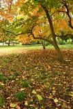 植物的公园蒙得维的亚,乌拉圭 免版税库存照片