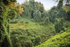 巴统植物的公园 免版税图库摄影
