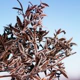 植物的分支用发光的透明冰报道为 库存照片