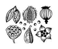植物的卡片 库存图片