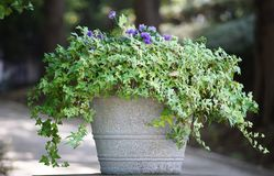 植物的叶子的场面在公园的一个罐装饰的 库存照片