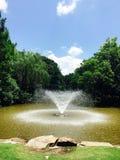 植物的喷泉 免版税库存图片