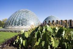 植物的圆顶庭院 库存照片