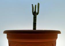 植物的干燥茎 库存图片