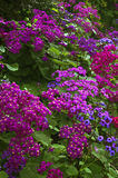 植物的弗朗西斯科庭院圣 免版税库存图片