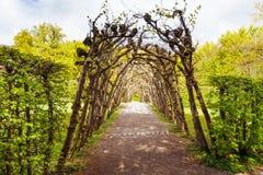 植物的弧在Bergpark庭院公园 免版税图库摄影