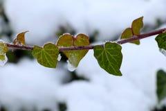 植物的心脏为情人节在冬天 免版税库存照片