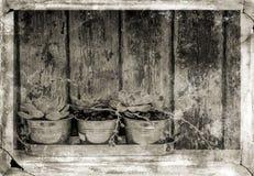 植物的抽象图象有难看的东西作用的 库存图片