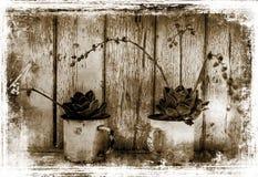 植物的抽象图象有难看的东西作用的 免版税库存图片