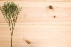 植物的枝杈 免版税库存图片