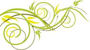 植物的查出的装饰品 库存照片