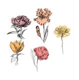 植物的植物例证 handrawn 免版税库存照片
