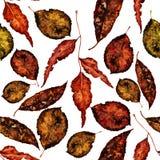 植物的水彩无缝的样式 美好的手拉的纹理 网页的浪漫背景,婚姻 免版税库存照片