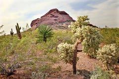 植物的沙漠庭院约书亚・梧桐 库存图片
