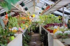 植物的温室 库存图片