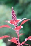 植物的点 免版税库存照片