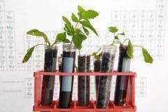 植物的研究 库存图片