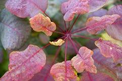 植物的秋叶有冰晶的 图库摄影