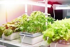 植物的耕种用现代方法 免版税库存图片