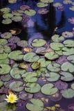植物的自然 免版税库存图片