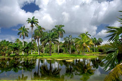 植物的费尔柴尔德从事园艺热带 免版税图库摄影