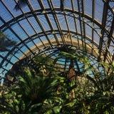 植物的都市庭院 图库摄影