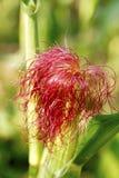 植物的头发 免版税库存图片