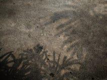 植物的阴影肮脏的难看的东西水泥的 免版税库存图片