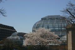 植物的dc庭院国民华盛顿 图库摄影