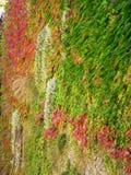 植物的Tapis,阿讷西(法国) 免版税库存照片