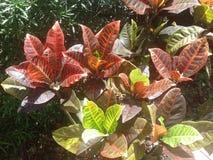 植物离开,并且灌木ybor城市砸紧佛罗里达 免版税库存照片