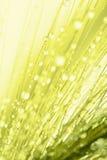 植物种子抽象宏观照片用水 免版税库存图片