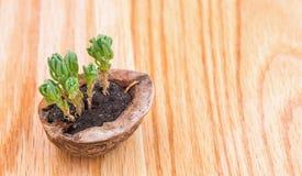 植物简言之 库存图片