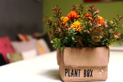植物箱子 免版税库存图片