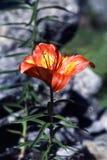 植物紫色 图库摄影