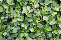 植物纹理 免版税图库摄影