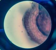植物细胞 库存照片
