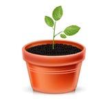 植物罐和年幼植物  库存图片