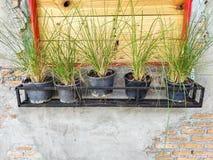 植物罐在窗口附近连续被安置,与砖和水泥墙壁 免版税库存照片
