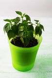 植物罐的年幼植物,垂直 免版税库存图片