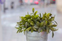 植物罐 库存图片