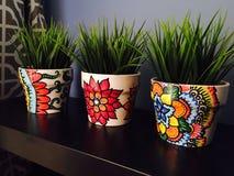 植物罐 免版税库存图片
