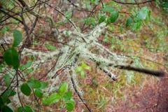 植物群和动物区系在forrest加拿大 免版税库存图片