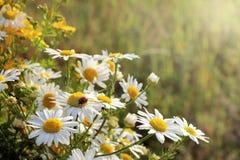 植物群和动物区系在夏天 库存照片