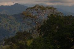 植物群和动物区系在费沙尔小山 库存照片