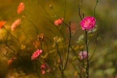 植物群和动物区系在费沙尔小山 库存图片