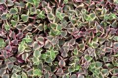 植物群样式 免版税库存照片