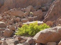 植物群的代表在峡谷上色了峡谷 库存照片